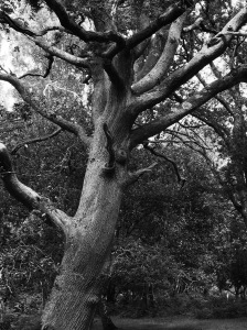 Spooky tree in The NEw Forest